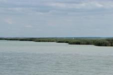 Schilfgürtel vom See aus