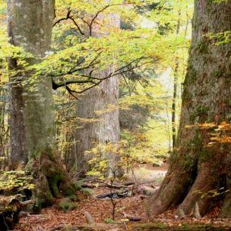 Böhmerwald 04